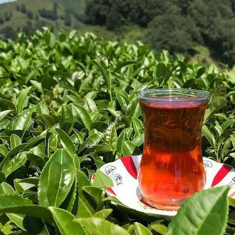 فروش ویژه چای لاهیجان بهار 1400